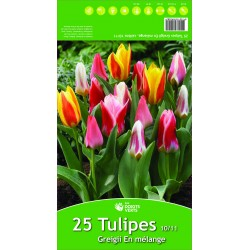 Tulipes Greigii mix x 25