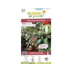 Kiwi autofertile, Actinidia Chinensis SOLISSIMO® - pot de 2L