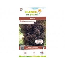 Acer platanoïde crimson sentry - pot de 15L
