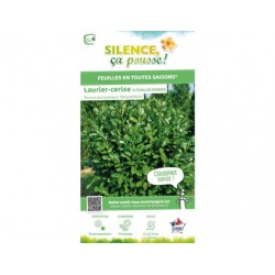 Prunus laurocerasus rotundifolia - pot de 2,5L