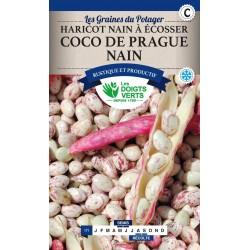Haricot Nain Coco Rose 250 g